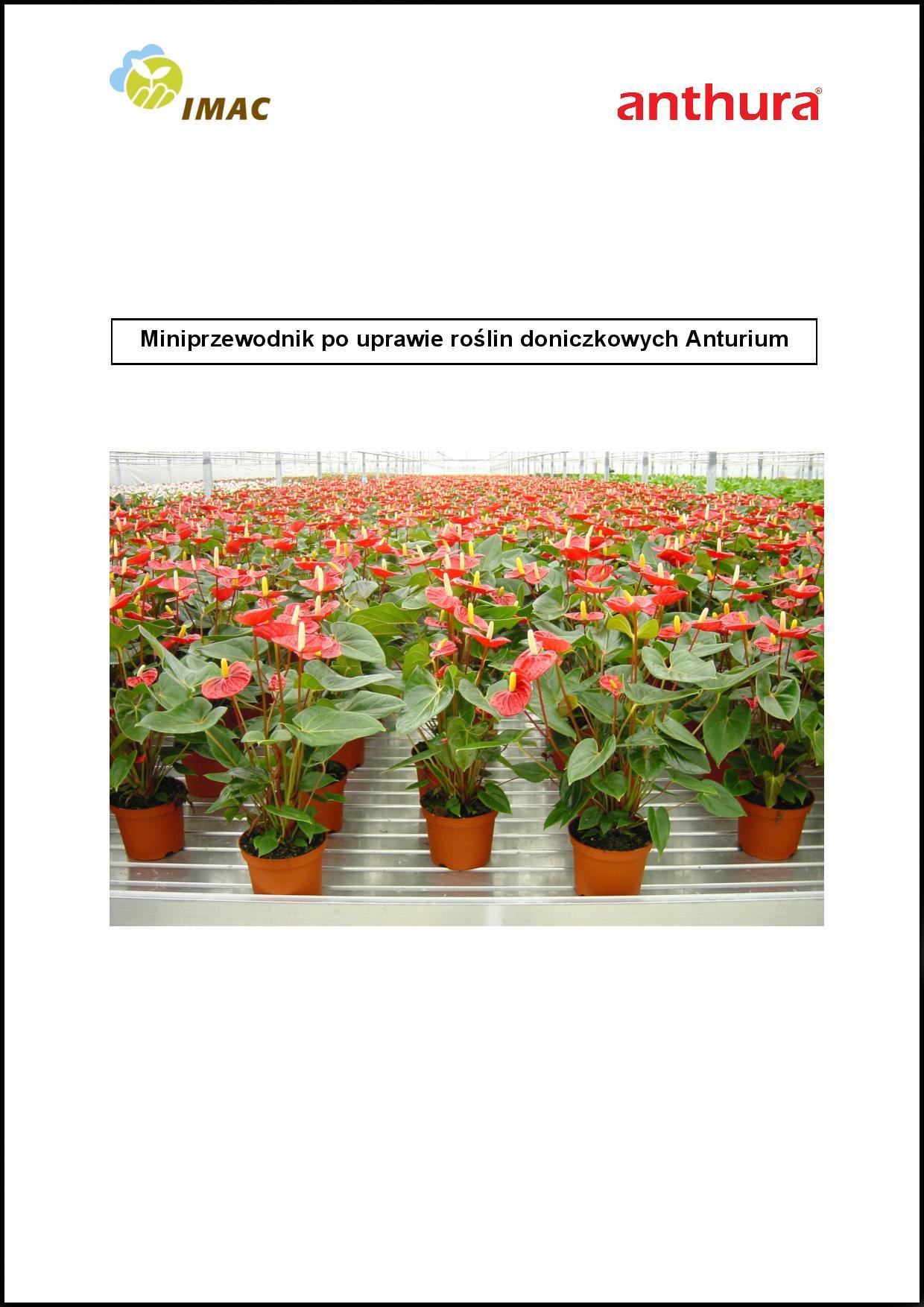 mini przewodnik po uprawie roślin doniczkowych Anturium
