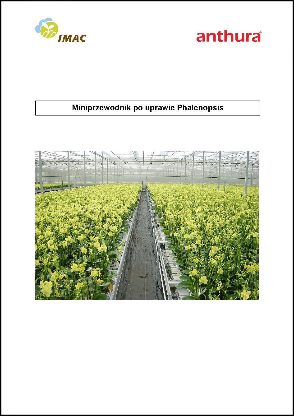 mini przewodnik po uprawie Phalaenopsis
